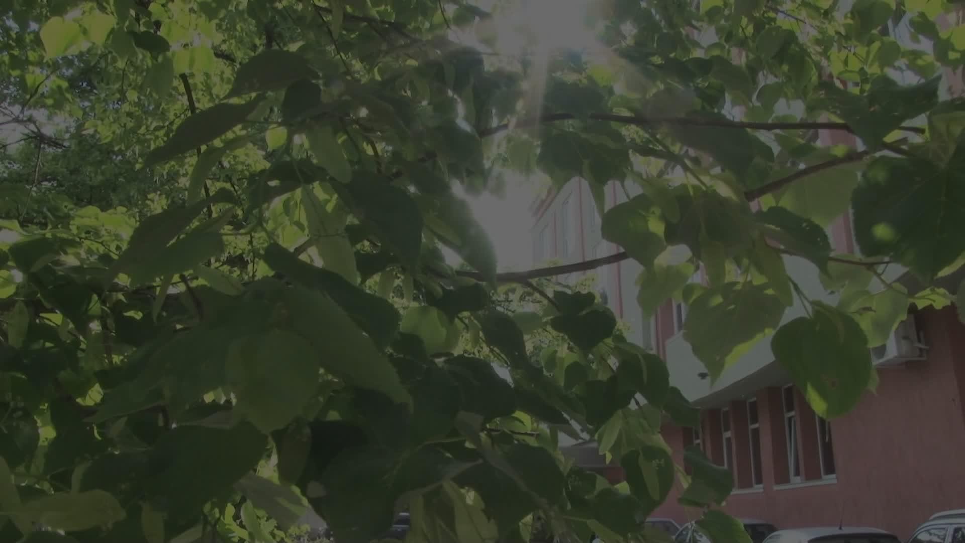 Фото Видео заснемане на сватба в хотел Акорд (Видео)